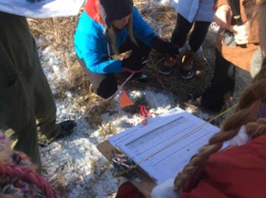 Tree Measuring Fall 2014