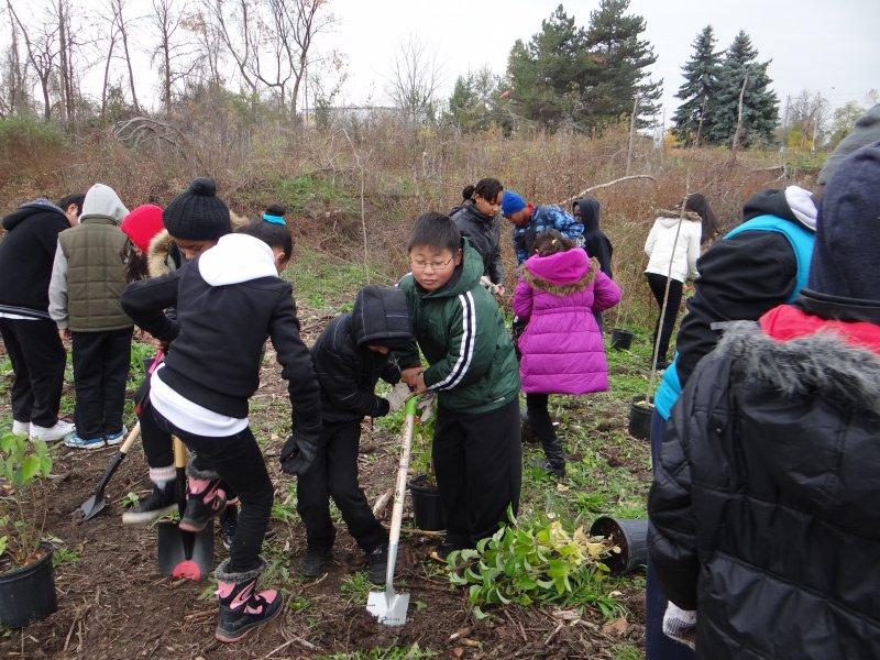 Students planting native species