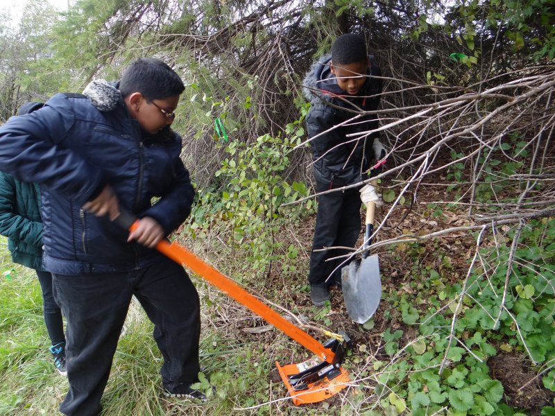 Students pulling out buckthorn
