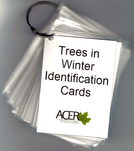 Trees In Winter Identification Cards