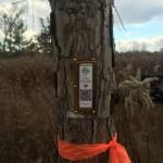 TreeCaching